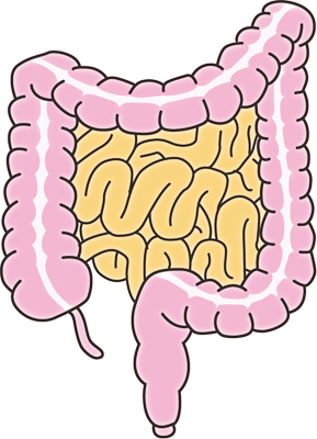 腸2.png